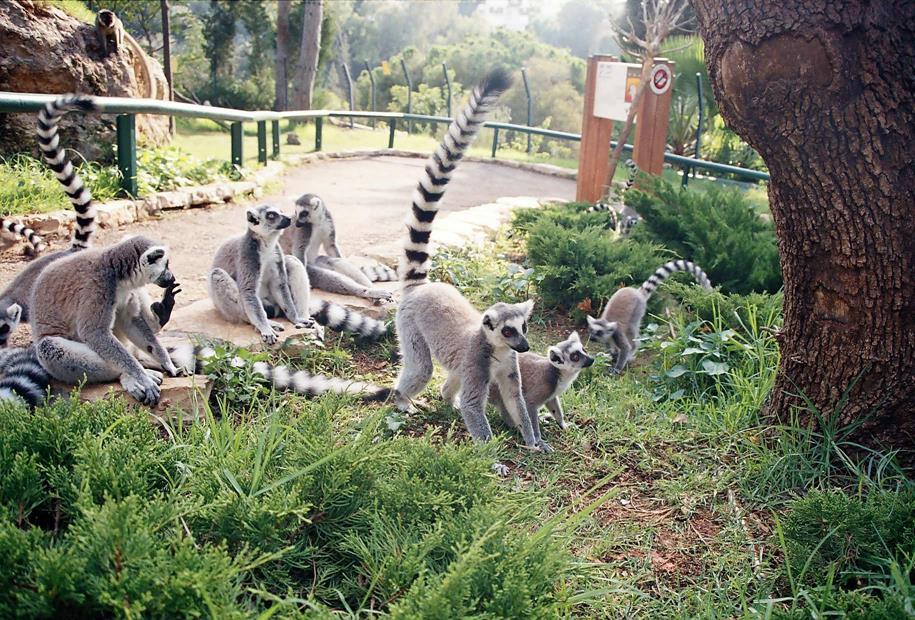 Haifa Zoo